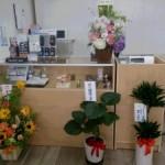 三田補聴器コスモスはお花であふれています。