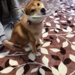 犬と補聴器